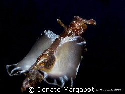 Aplysia fasciata, Canon G9, Sea&amp;Sea YS110 by Donato Margapoti 